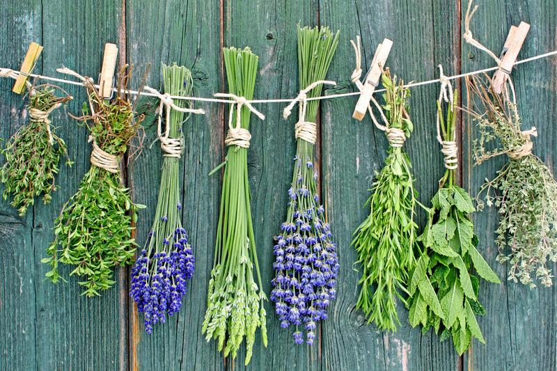 Козлятник при сахарном диабете: польза трави и народние рецепти