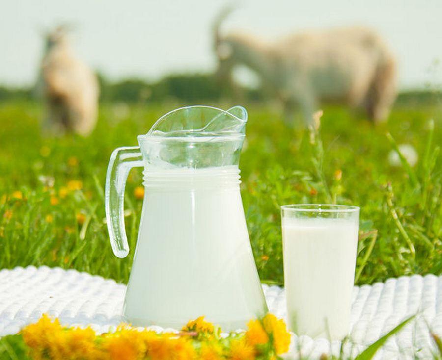 Молоко при сахарном диабете 2 типа: чем полезен продукт, ограничения