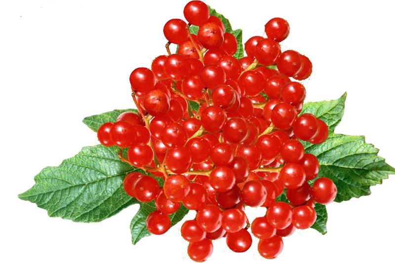 Калина при сахарном диабете 2 типа: польза ягоди, рецепти использования