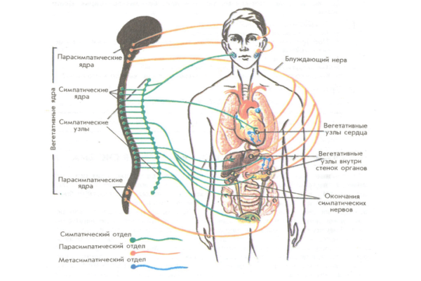 Гастропарез: причины, симптомы, лечение