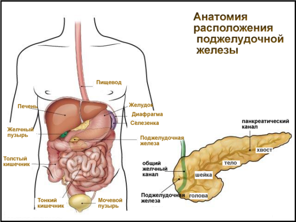Панкреатит осложненный сахарным диабетом диета